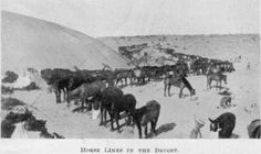 Horse Lines in the Desert.