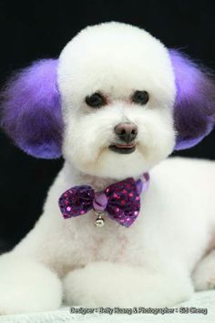 -repinned- Creative dog grooming