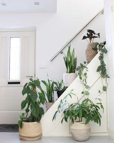 Binnenkijken bij jeannettevanluyck Air Cleaning Plants, Air Plants, Indoor Plants, Sansevieria Plant, Corner Plant, Living Vintage, Garden Living, Scandinavian Living, Snake Plant