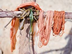 Fibershed dyes with toyon and sage by the seaside. Rack made of driftwood and kelp. Yes, yes.