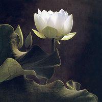 (CD-440) - Cy DeCosse: White Lotus