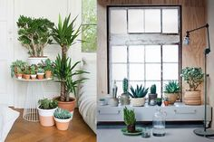 retro planten - Google Search