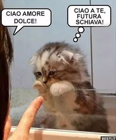 Cats and kittens funny animals, cute animal memes, funny animal pictures. Humor Animal, Funny Animal Jokes, Funny Cat Memes, Funny Cat Videos, Cute Funny Animals, Funny Animal Pictures, Cute Baby Animals, Funny Dogs, Funny Humor
