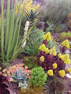 back yard garden featuring a wide assortment of succulents which thrive in the San Francisco hilltop climate