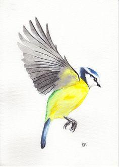 Blue tit landing Print £4.00