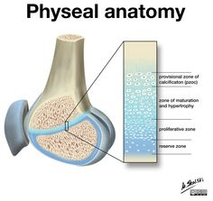 Understanding the normal physeal anatomy and physiology is critical to understanding many pathologies in pediatric patients, as findings at the physis are common.   http://radiopaedia.org/cases/physeal-anatomy-illustration