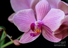 Purple Greeting Card featuring the photograph Single Orchid by Cheryl Baxter