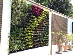 Muroverde  jardin vertical