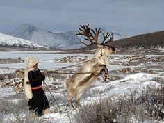Reindeer nomad in Northern Mongolia.