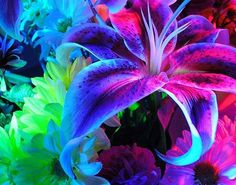 Flowers images beautiful flowers wallpaper and background photos Glowing Flowers, Neon Flowers, Pretty Flowers, Lilies Flowers, Flowers Garden, Colorful Flowers, Beautiful Flowers Photos, Flower Photos, Beautiful Pictures