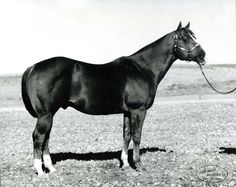 Two Eyed Jack was Quarter Horse stock from his cannon to his crest, and every inch of muscle in between. He was inducted into the Hall of Fame in 1996. Learn more about the AQHA Hall of Fame inductees at http://aqha.com/en/Foundation/Museum/Hall-of-Fame/Hall-of-Fame-Inductees.aspx