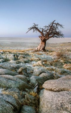 The Makgadikgadi Pan in Botswana is essentially waterless and arid for much of the year, yet it remains one of the most beautiful, haunting and intriguing landscapes in Africa. Safari Online, Westerns, African Tree, All About Africa, Baobab Tree, Amazing Race, African Countries, Exotic Places, Top Destinations