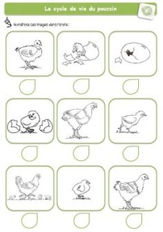 Cycle de vie des animaux, idées d'images avec des vidéos. Easter Worksheets, Busy Book, Kindergarten Classroom, Life Cycles, Animals For Kids, Easter Crafts, Social Studies, Teaching, Geography