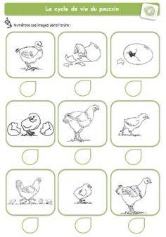 Cycle de vie des animaux, idées d'images avec des vidéos.