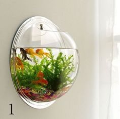 Get an #aquarium for rent from less than £4.00 per day at and enjoy the maintainence benefits also.
