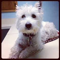 """@prestonspeaks's photo: """"I am getting checked out before my dental. Everything is good to go for me and Elvis to have pretty teeth!""""    www.PrestonSpeaks.com"""