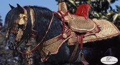 Barb / berber horse tack