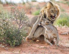"Photo ""Watchout!!"" by Bridgena_Barnard"