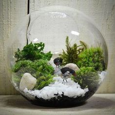 bonsai moosbaum terrarium selber machen youtube basteln pinterest youtube selber machen. Black Bedroom Furniture Sets. Home Design Ideas