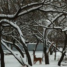 camo's first snow #pitbull #smile #rescue #dog