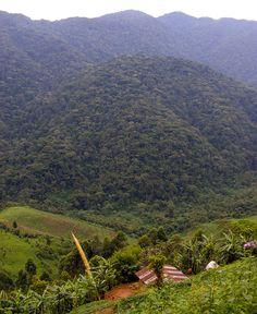 "View of Bwindi Impenetrable Forest, above Ivy River en route to Nkuringo. ""How to hike Bwindi"" - a fantastic walk through the forest from Buhoma http://muzungubloguganda.com/2015/09/bwindi-hiking-gorilla-trekking-uganda/"