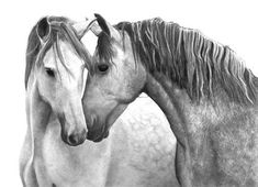Dapple Grey Horses original graphite drawing by Margret Heyn.