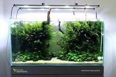 Nature aquarium