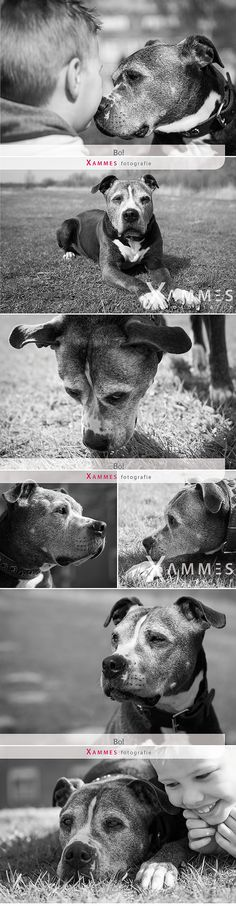 Bo, huisdierfotografie, Xammes fotografie
