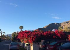 Palm Springs Vacation 2015  #vacationideas  Gorgeous!