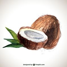 hand painted coconut Free Vector