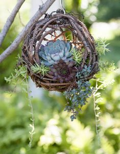 Grapevine ball baskets are a beautiful, natural-looking container for succulents. #planters #decor