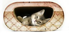 Fantastic cardboard furniture for cats from cat-on.com. Made in Berlin.