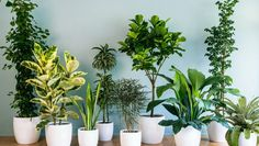 Image result for small indoor plant