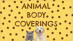 I created this pin. This is a lesson that I found online about animal body coverings. This helps students to understand their observation skills and their senses through individual observations of the outer body of animals. Kindergarten Goals, Kindergarten Science, Montessori Preschool, Animal Coverings, Reading Resources, Science Resources, Science Ideas, First Grade Freebies, Zoo Activities