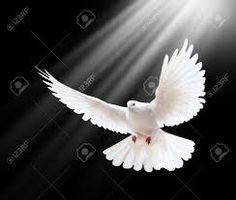 Resultado de imagen para palomas blancas