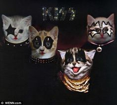 Artist Uses Kittens to Recreate Classic Album Covers. The Kiss album cover just makes me giggle! Famous Album Covers, Rock Album Covers, Classic Album Covers, Cute Kittens, Cats And Kittens, Siamese Cats, Crazy Cat Lady, Crazy Cats, I Love Cats