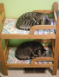 "#kitty bunk.....MAN, YOU SHOULD HAVE SEEN THE ""CAT-FIGHT"" ABOUT WHO GOT THE LOWER BUNK.....THE FUR REALLY FLEW......ccp"