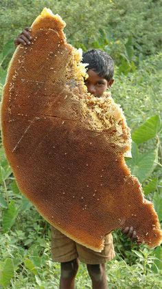 Massive chunk of wild honeycomb! Photo by: Tarsh and Tariq Thekaekara