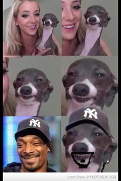Snoop Doggs twin brother is a real dog dawg! This is a funny picture about Snoop Dogg and how he has a lookalike who is Jenna Marbles dog! Funny Animal Jokes, Funny Animal Pictures, Funny Photos, Funny Dogs, Funny Animals, Hilarious Pictures, Funny Images, Really Funny Memes, Stupid Funny Memes
