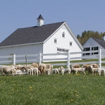 Pineland Farms, Maine