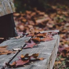 Free stock photo of bench, leaves, autumn, fall Iphone Wallpaper Herbst, Iphone Mobile Wallpaper, Fall Images, Fall Photos, Evermore Lyrics, Pumpkin Wallpaper, Cute Fall Wallpaper, Thank You For Order, Taylor Swift Wallpaper