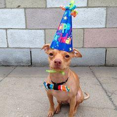 Happy Birthday To Tuna The Heartmeltingest Dog On Instagram