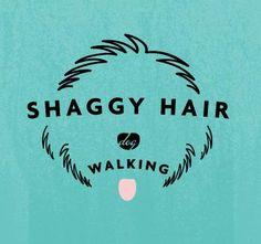 Shaggy Hair dog walking