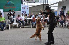 Gobernación entregará kit de rescate animal a la Policía de Carabineros