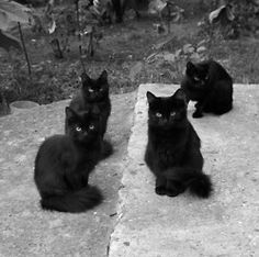 Black cats. Black cats. Black cats. This is so beautiful. There is no evil here. Just cuteness. The Incensewoman