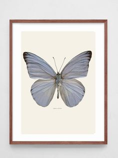 Prints - Liljebergs Appia Celestina, print 30x40 tonad bakgrund