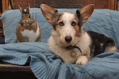 A Bunny and Her Dog