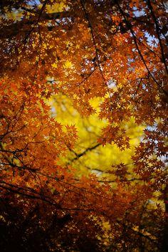 Autumn tints... by Kazuo Ichikawa