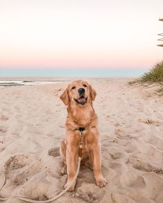 defaultr-b - 0 results for golden retriever Cute Dogs And Puppies, All Dogs, Doggies, Poodle Puppies, Chien Golden Retriever, Golden Retrievers, Retriever Puppy, Black Labrador Retriever, Labrador Retrievers