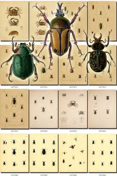 INSECTS-27 Collection of 110 vintage illustrations beetles crabs cockroach animals picture image High resolution digital download printable           data-share-from=listing        >           <span class=etsy-icon